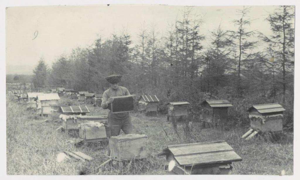 Пчеловодство в СССР. На колхозной пасеке 2