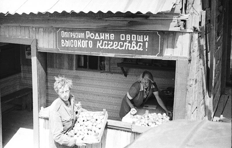 Пчеловодство в СССР. Заготконтора