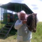 Канунников Виктор поймал рой