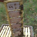 Мед в сотах с пасеки 22 Улья