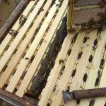 Мини-рамки с пасеки на Алтае