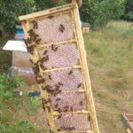 Мед в сотах в мини-рамке