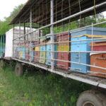 Работа пчел