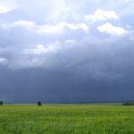 Скоро дождь над пасекой