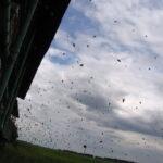 Летят пчелы в улей