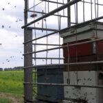 Летят пчелки