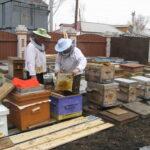 Мудрый и молодой пчеловод