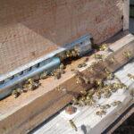 Пчелы несут обножку