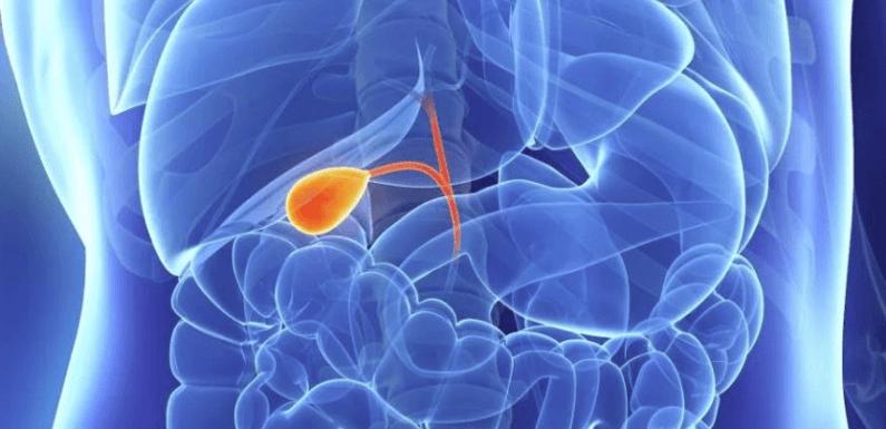 Мед и сократительная функция желчного пузыря