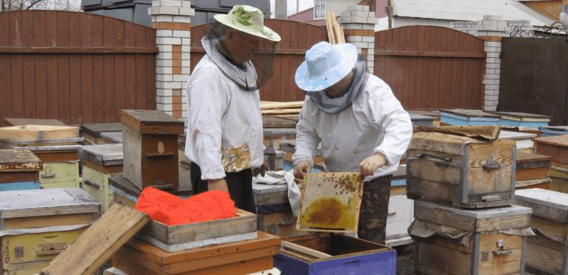 Пчеловодство в генах