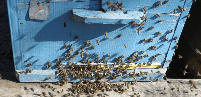 Пчеловодческий сезон 2021г. открыт!