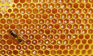 Соты с незрелым медом
