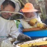 Пчеловоды Канунниковы за работой