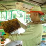 Пчеловод изучает рамку