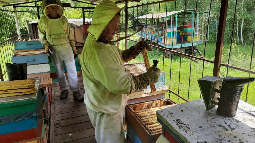 Отбираем рамки с медом для откачки